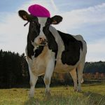 A Dairy Farm in France